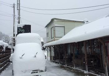 雪が。ついにキターー!!