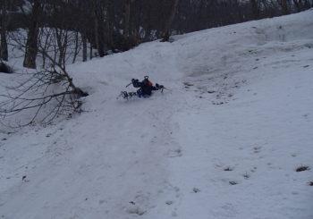 雪が開いたところにはフキノトウ